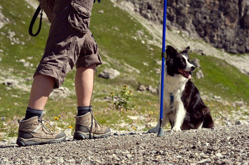 Consigli utili per fare trekking con il vostro cane